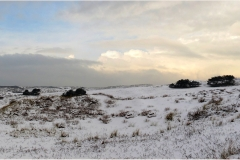 New panorama 1R